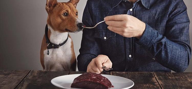 Tips on Feeding Your Dog Correctly